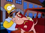Pig biting homer