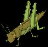 Giantgrasshopper transimage