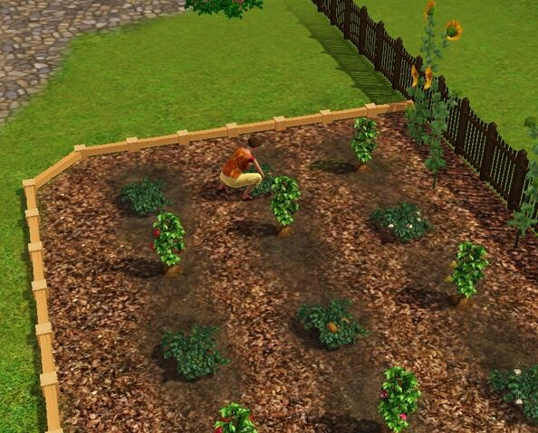 File:Bachelor Home Garden.jpg