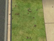 Ts2 cockroaches