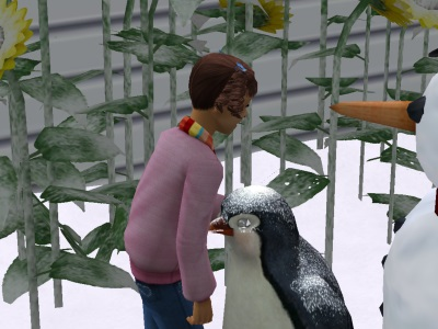 File:PettingPenguin.jpg