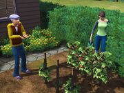 Thesims3-10-1-