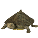File:Barbour's Map Turtle.png