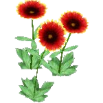 File:Wildflower Indian Blanket.png