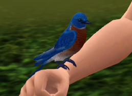 File:Bluebird.png