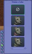 Collars Dog