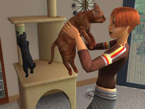 File:Cat Hug.jpg