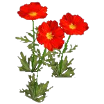 File:Wildflower Cosmos.png