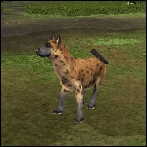 File:Hyena 2.jpg
