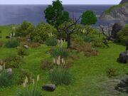 Barnacle bay nature