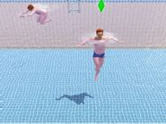 AngusSwimming