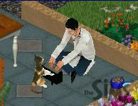 File:A cat playing a keyboard.JPG