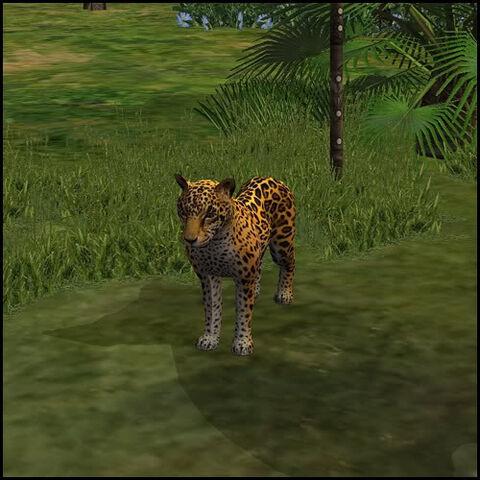 File:Jaguar.jpg