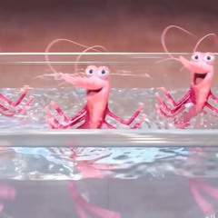 The shrimp audition to be part of <a href=