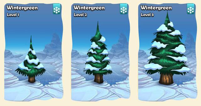 File:04 tree ľad wintergreen.jpg