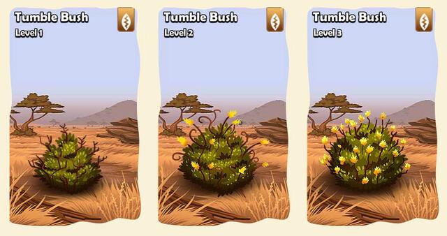 File:02 bush savana tumble bush.jpg