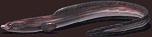 Fish-Eel