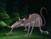 Spider-Rat