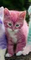 Colored-kittens-3