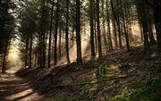 Dark-woods-wallpaper-41985-42974-hd-wallpapers