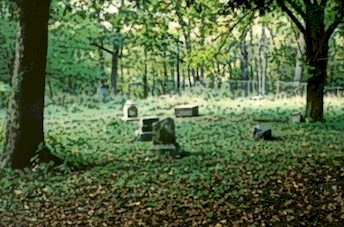 File:Bach grove2.jpg