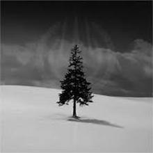 Freezing Tree