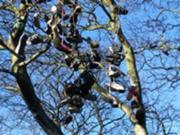 180px-ShoeTree