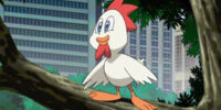 Cucky (Sonic X)