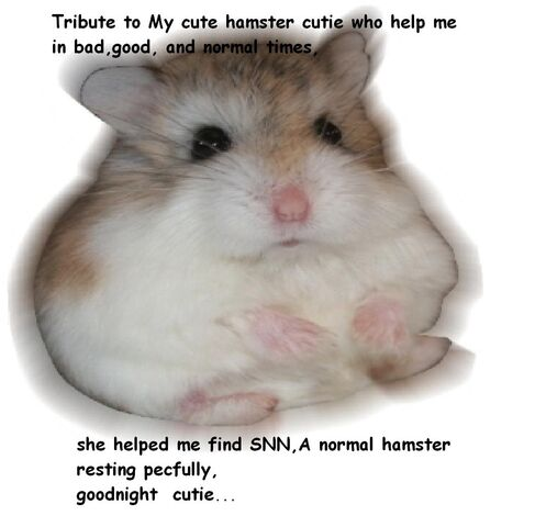 File:Cutie my best hamster.jpg