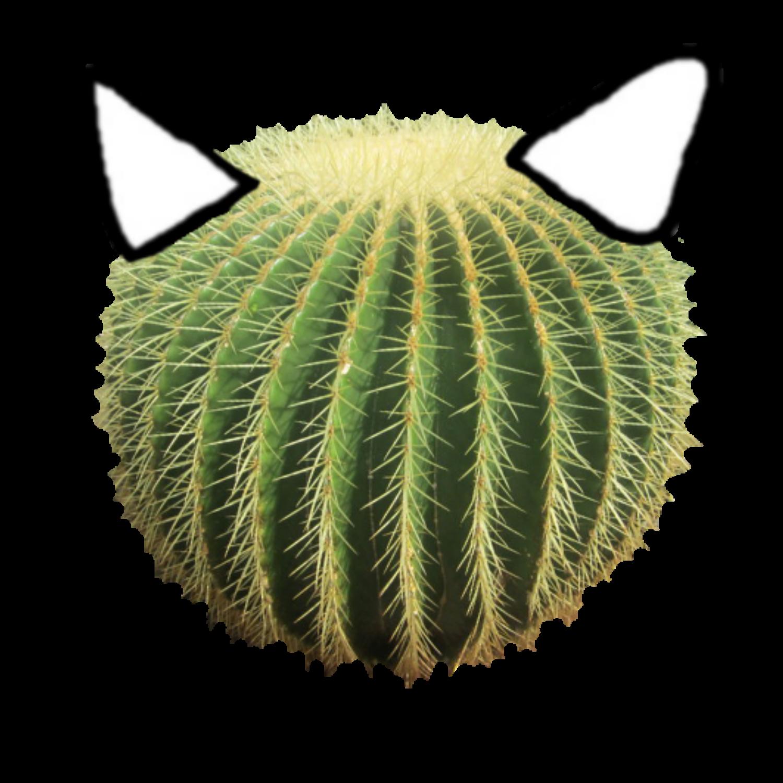 CactusMankyTransparent
