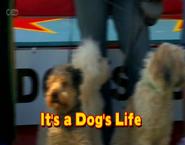 It'saDog'sLife(2013)titlecard