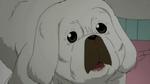 Soul Eater NOT Episode 5 - Kim's dog 7