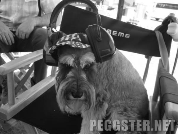 File:Ada the dog.jpg
