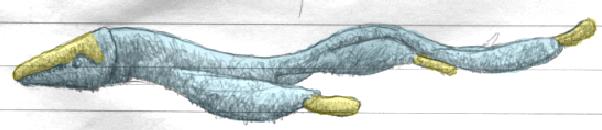 File:Lancacaetus Colored.png