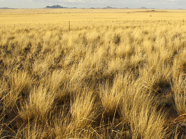 File:Grasslands-hero.jpg