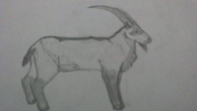 File:Canadian ibex.jpg