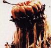 Spincobra