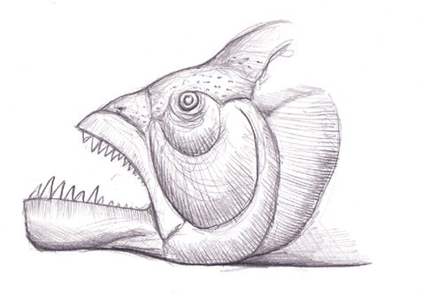 Common pugpike