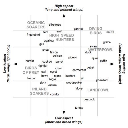 BirdWingGraph