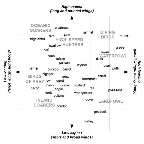 File:BirdWingGraph.png