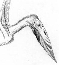 Gigantuscranitus
