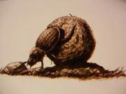 Dungbeetle