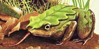 Oakleaf Toad