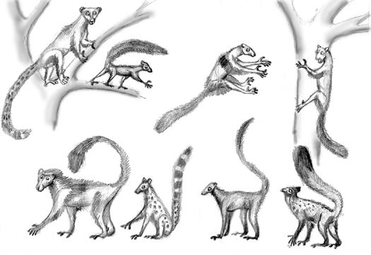 -spec- Arbourio and Trouper lemurs
