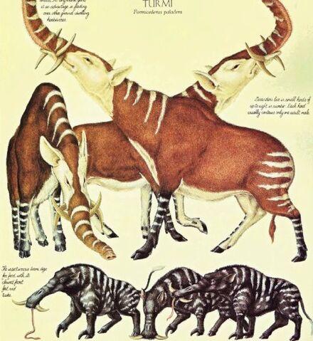 File:Procerosus elephanasus y formicederus paladens.jpg