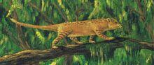Cattsorx