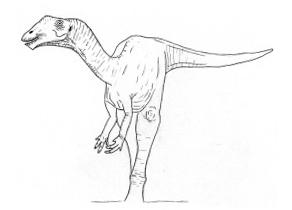 Marasaurusamerikus