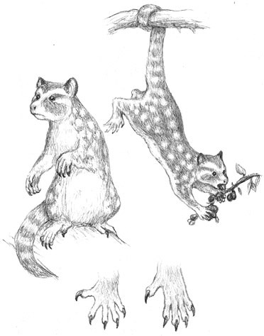 Sugarcat