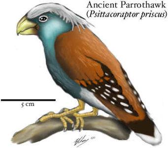 Ancient parrothawk