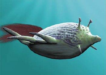 File:Reef glider.jpg